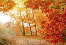 秋天吃什么养胃:清淡多水分
