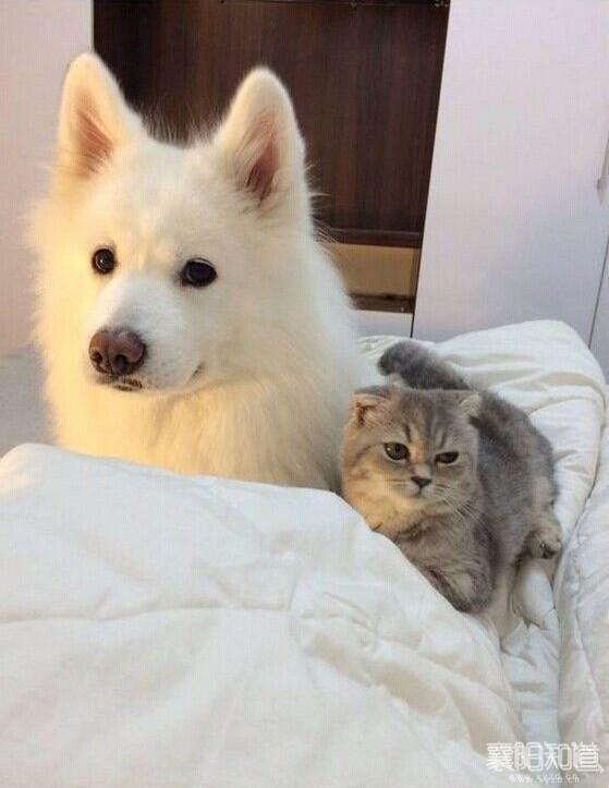 宠物.jpg